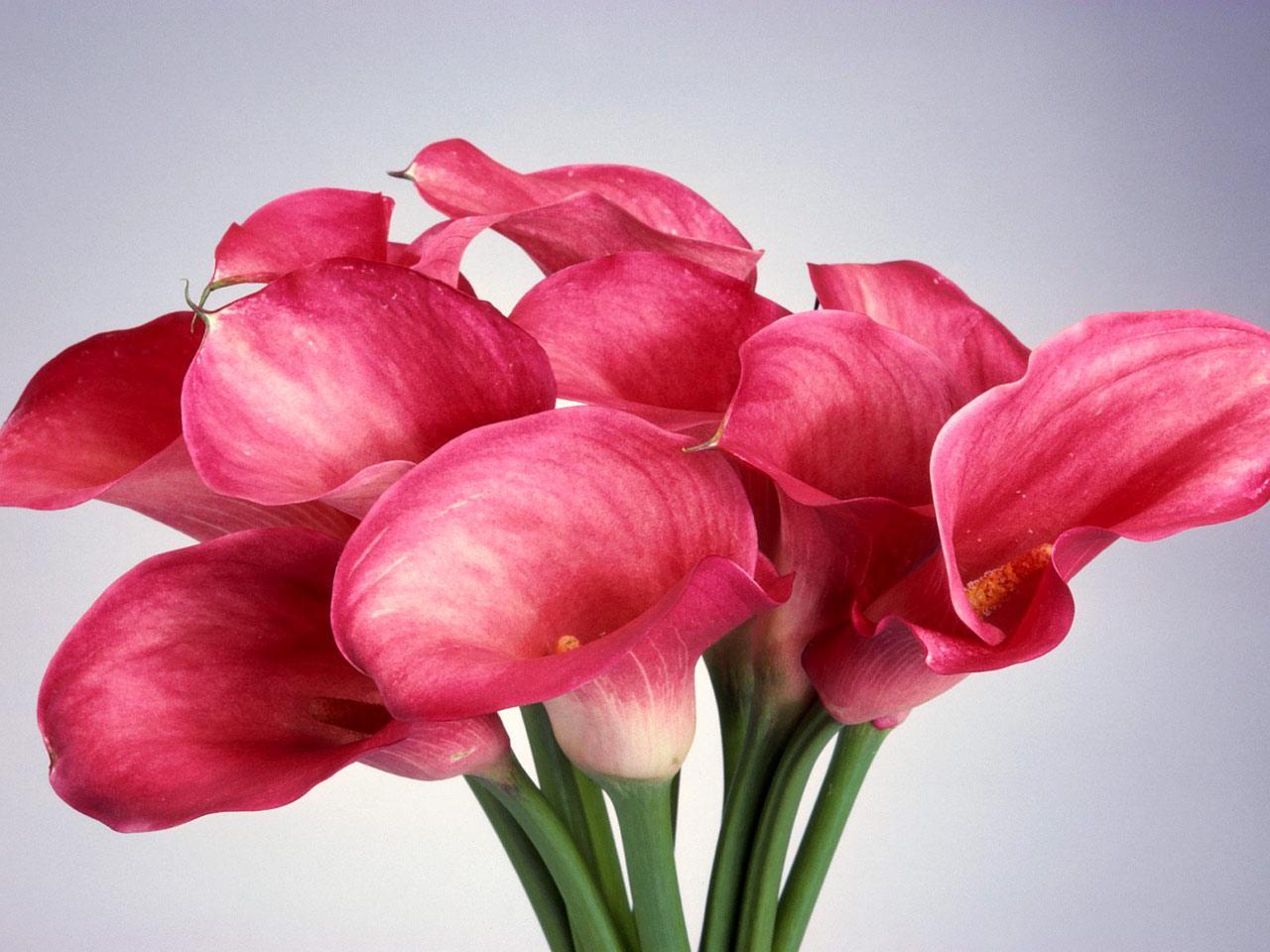 Факты про цветы и букеты