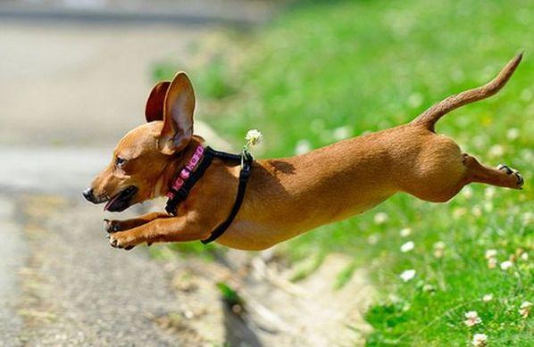 Весной необходимо защитить собаку