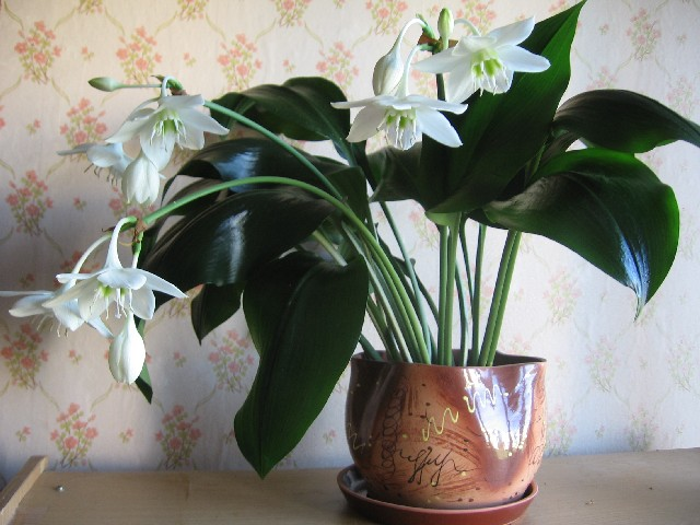 Каталог белых комнатных цветов с